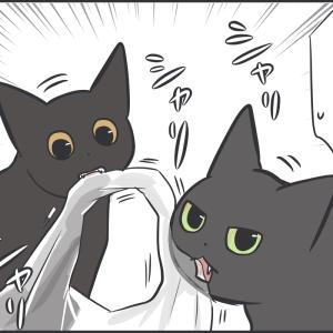 先住猫の真似をする新入り