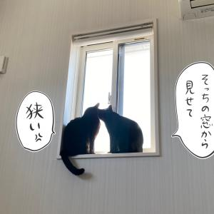 写真を撮られたくない実家猫と我が家の黒猫たちの写真
