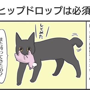 PECO更新のお知らせ/とても悪い顔をした黒猫画像
