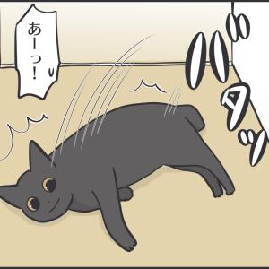キッチンへ進入する猫と人間の攻防