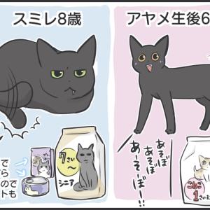 毎日が発見ネット更新のお知らせ/猫たちの写真