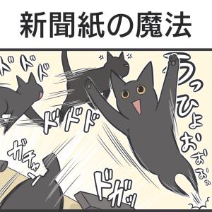 PECO更新のお知らせ/猫草を食べる黒猫写真