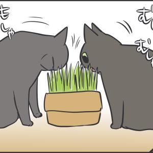 猫草を食べ続けているかと思いきや…