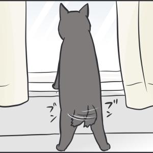 寝ても立ってもハの字の猫