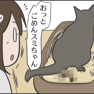 完全に猫の下僕にされている飼い主