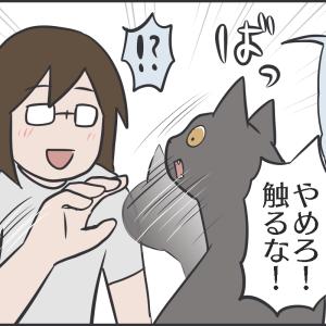 猫の心の声がガラ悪すぎた