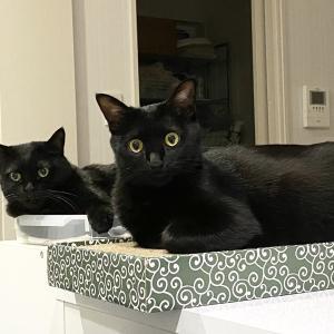 ひどい寝相のアヤちゃんと黒猫シンクロ画像