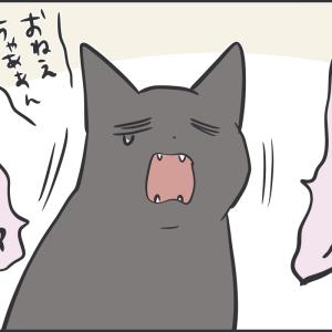 娘のことが大好きな黒猫