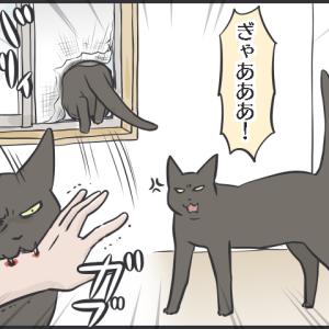 毎日が発見ネット更新のお知らせ/黒猫たちとリアル黒豹ぬいぐるみ写真など
