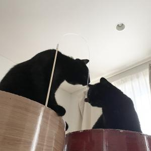 くつろいだり一緒に遊ぶ猫たち