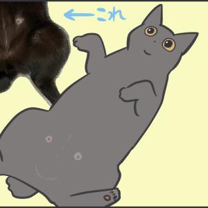 猫の第三の目を見た夫の行動