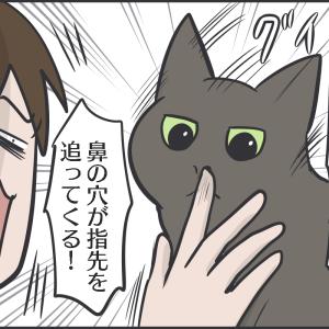 猫のクセがあるスリスリ