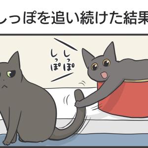 PECO更新のお知らせ/アヤメスミレマロ写真