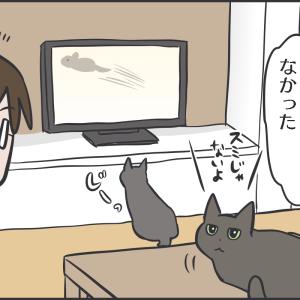 加減を知らない猫