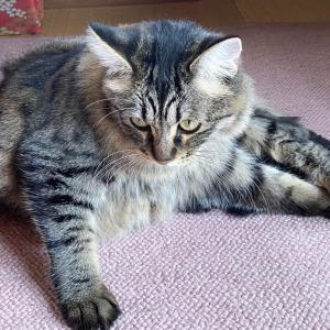 リングコンに入る猫
