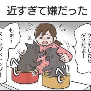 PECO更新のお知らせ/黒猫写真