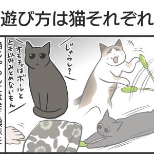 PECO更新のお知らせ/実家から送られてきた猫写真