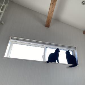 微妙な空気の猫たち/巨大モサモサ猫