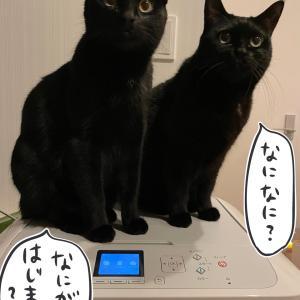 プリンターが気になってしかたがない猫たち