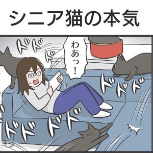 PECO更新のお知らせ/アヤちゃん動物病院へ行ってきました
