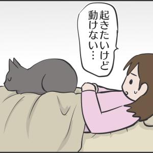 猫を寝かしてあげたまま動こうとした結果