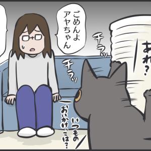 毎日が発見ネット記事更新のお知らせ/日向ぼっこする長毛猫