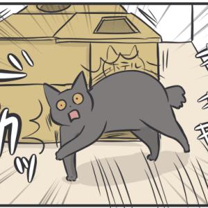 猫のダンボールハウスがだんだん壊れていく理由