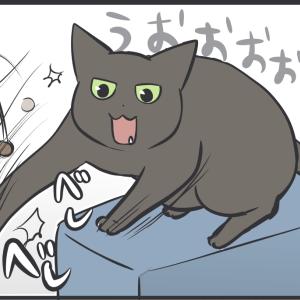 遊びたい猫たち