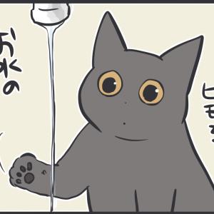 蛇口から出る水を見た猫の反応