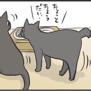 新しい猫の食器代を買った結果…