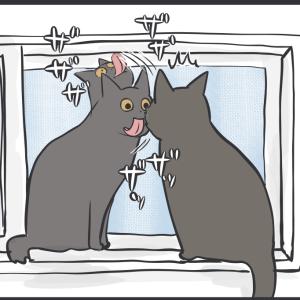 舐めたい猫とその理由(アヤちゃんの場合)
