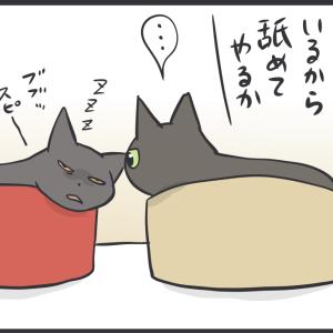 舐めたい猫とその理由(スミちゃんの場合)