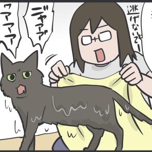 暑くなってきたので猫をお風呂に入れた結果