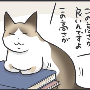 上半身高めな香箱座りをする猫