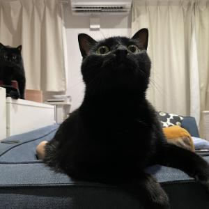 【猫写真】我が家の黒猫たちのオンとオフ