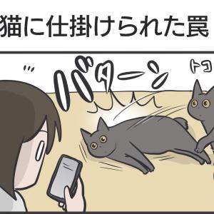 PECO更新のお知らせと黒猫たちの写真