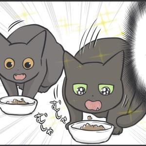 毎日が発見ネット更新のお知らせ/猫たちどうなっているの写真