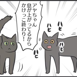 微妙な関係の猫たちが少し仲良くなってきたのでは…?