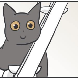 珍しい眺めに猫パンチの気分