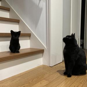 猫って案外小さい時と変わらないと思った写真