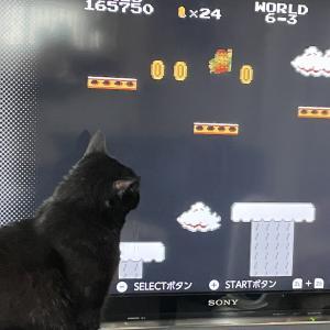 【猫写真】我が家の黒猫たちの日常
