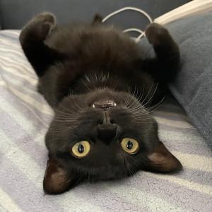 【猫写真】野生ゼロの黒猫