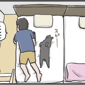 PECO更新のお知らせ/猫たちのおすまし写真
