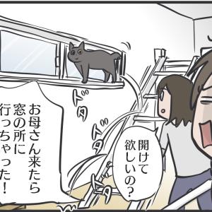 猫にとって私は窓の人