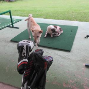 今朝のゴルフ