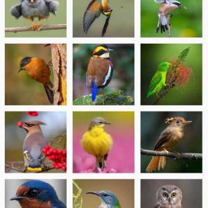 インスタ映えする野鳥写真