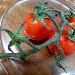 夕食の野菜