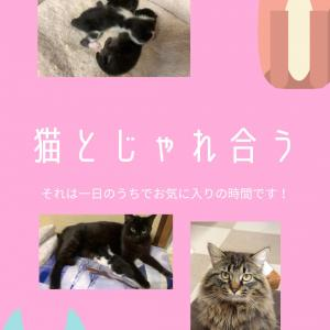猫との日々