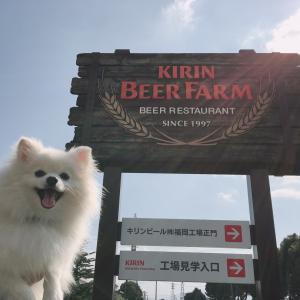 キリンビール工場 コスモス園