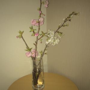 おうちでお花見